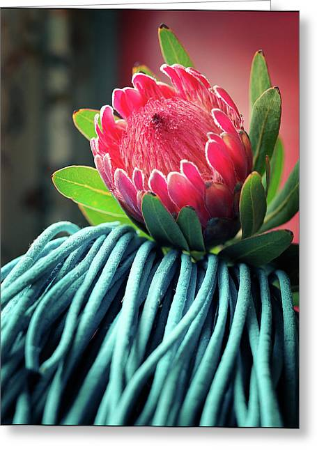Proteas Greeting Cards - Protea Greeting Card by Tim Nichols