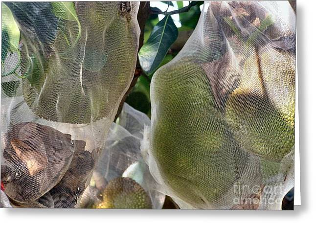 Durian Greeting Cards - Protect your Durian Greeting Card by Kathy Daxon