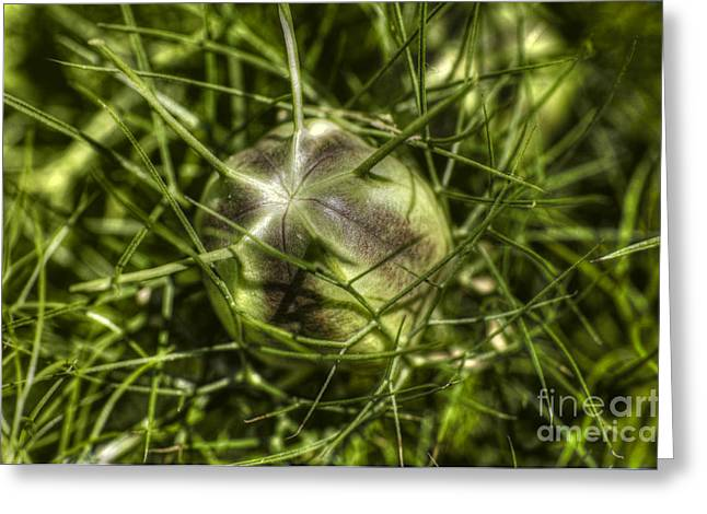 Best Sellers -  - The Nature Center Greeting Cards - Protected Greeting Card by Chris Fleming