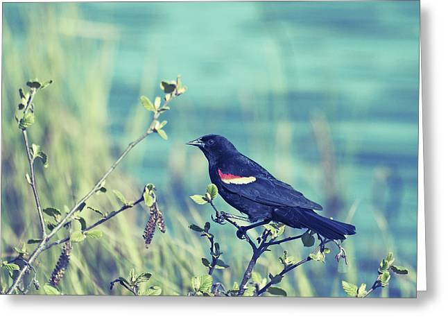 Bird Photographs Greeting Cards - Protective Greeting Card by Aimelle
