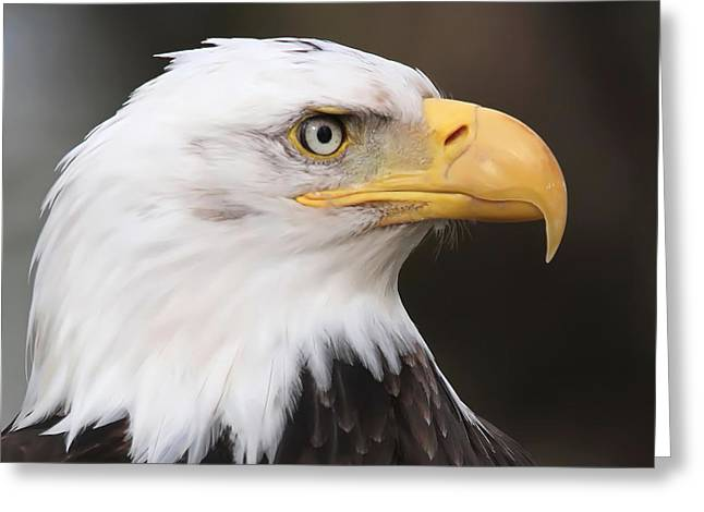 National Bird Greeting Cards - Proud Eagle Greeting Card by Angie Vogel