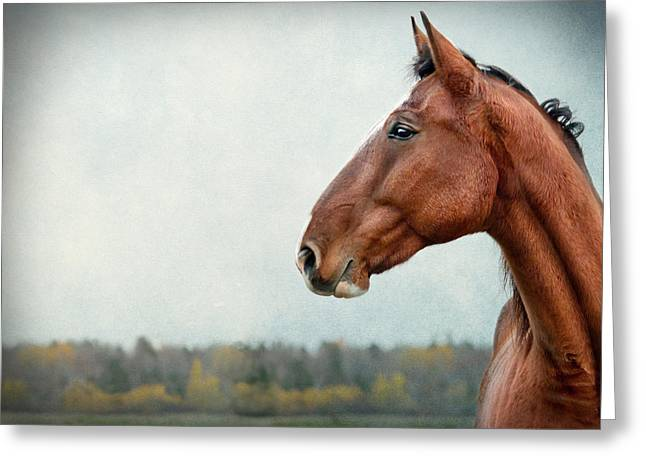 Race Horse Greeting Cards - Proud Greeting Card by Maggie Terlecki