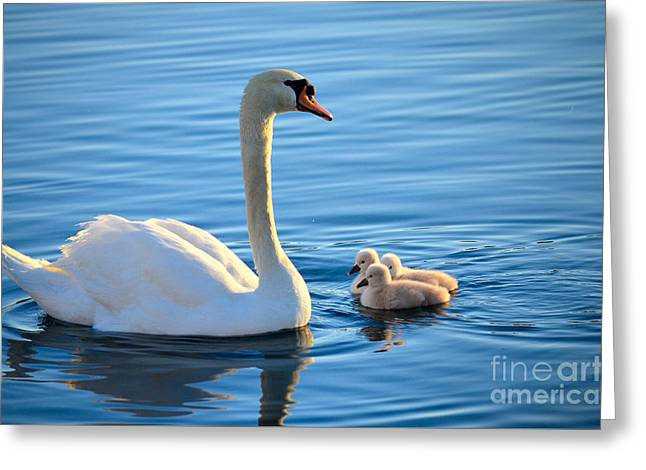 Water Fowl Greeting Cards - Proud Mother Greeting Card by Deb Halloran