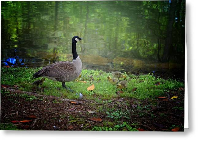 Woodland Scenes Greeting Cards - Proud Mother Goose Greeting Card by Maria Urso