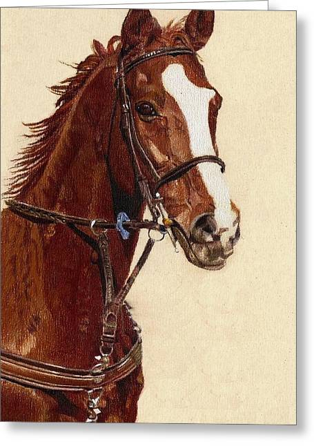 Watercolor. Equine. Bridle Greeting Cards - Proud - Portrait of a Thoroughbred Horse Greeting Card by Patricia Barmatz