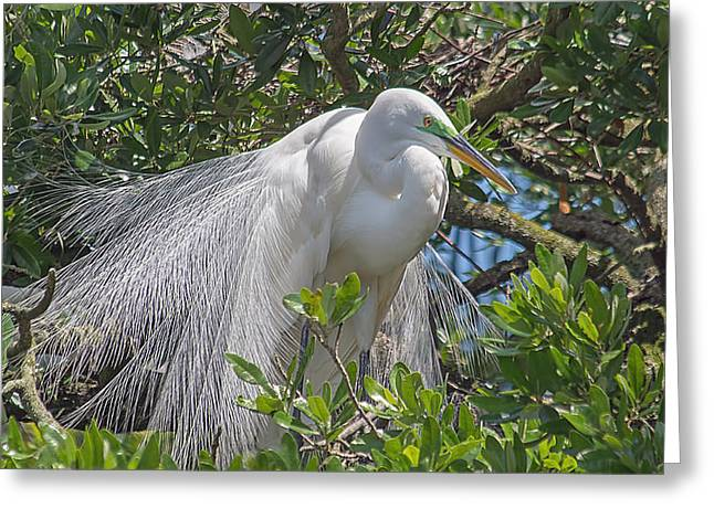 Bird Rookery Swamp Greeting Cards - Proudly Posing Greeting Card by Kenneth Albin
