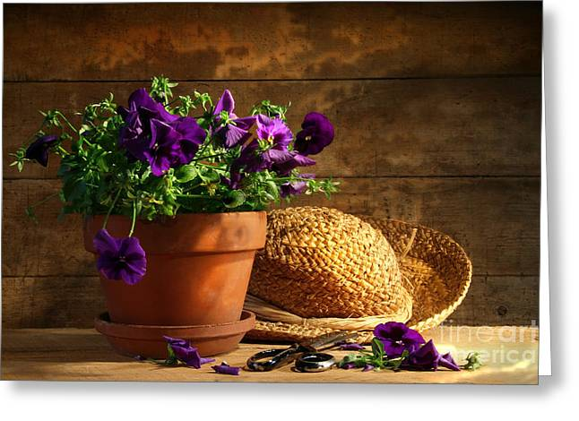 Pruning purple pansies Greeting Card by Sandra Cunningham