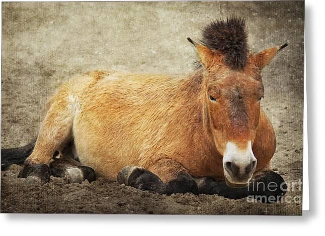 Przewalski-horse Greeting Card by Angela Doelling AD DESIGN Photo and PhotoArt
