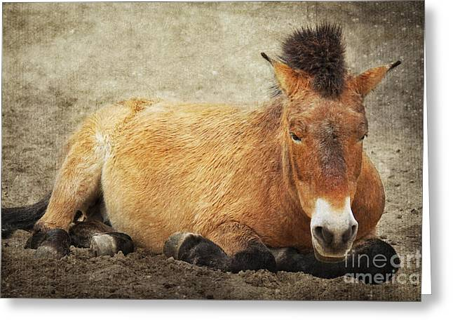 Wild Horse Mixed Media Greeting Cards - Przewalski-Horse Greeting Card by Angela Doelling AD DESIGN Photo and PhotoArt