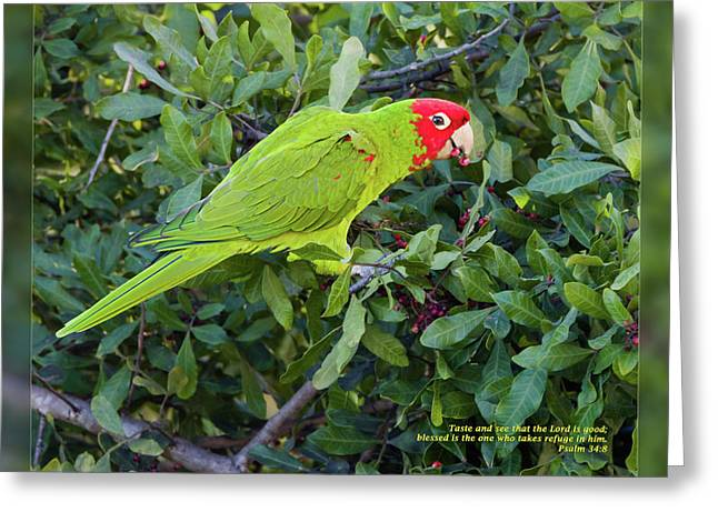 Psalm One Greeting Cards - Psalm 34 8 Greeting Card by Dawn Currie