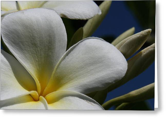 I Fiori Greeting Cards - Pua Lena Pua Lei Aloha Tropical Plumeria Maui Hawaii Greeting Card by Sharon Mau