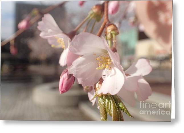 Nature Center Greeting Cards - Public Square Blossoms Greeting Card by Christina Verdgeline