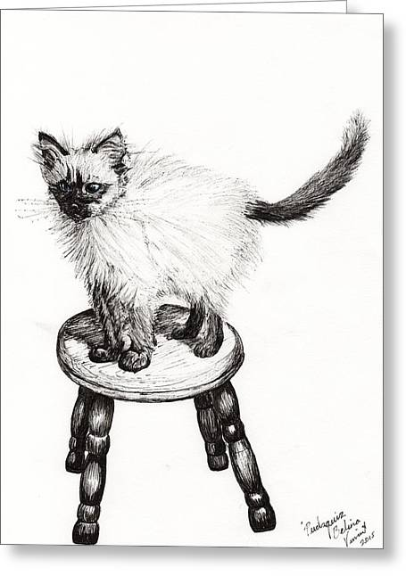 Cat Prints Greeting Cards - Pudsquiz Belina Greeting Card by Vincent Alexander Booth