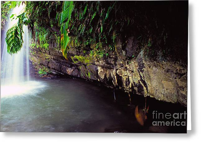 Puerto Rico Waterfall Greeting Card by Thomas R Fletcher