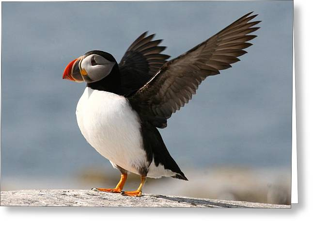 Puffins Greeting Cards - Puffin impersonating an Eagle Greeting Card by Stanley Klein
