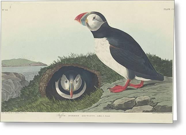 Shorebird Greeting Cards - Puffin Greeting Card by John James Audubon