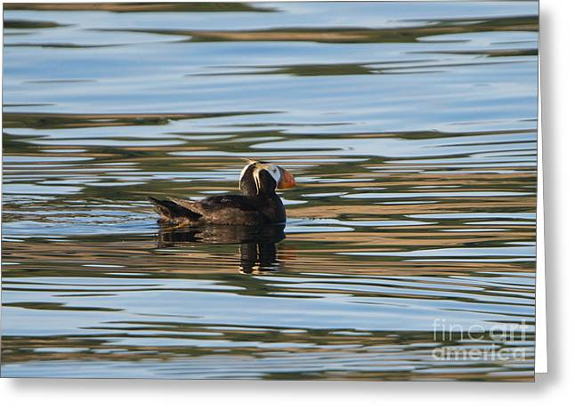 Puffin Reflected Greeting Card by Mike Dawson