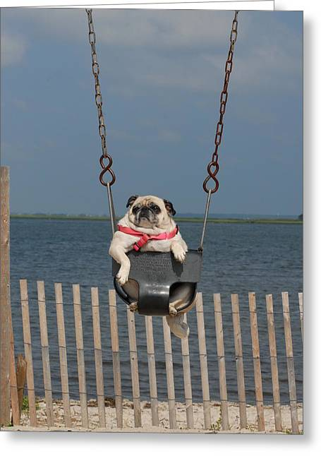 Litter Mates Photographs Greeting Cards - Pug 98 Greeting Card by Joyce StJames