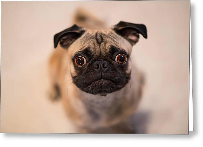 Pug Dog Greeting Card by Laura Fasulo