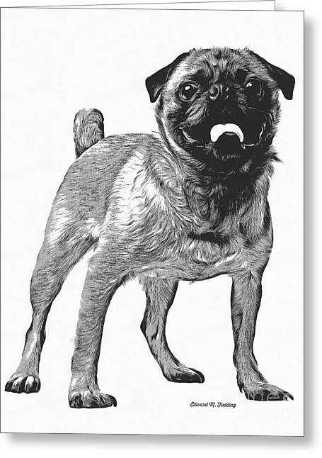 Puppies Drawings Greeting Cards - Pug Dog Standing Graphic Greeting Card by Edward Fielding