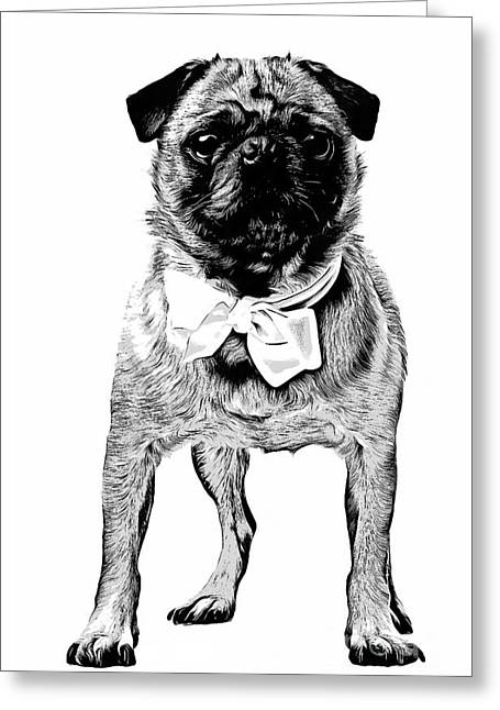 Puppies Drawings Greeting Cards - Pug Greeting Card by Edward Fielding