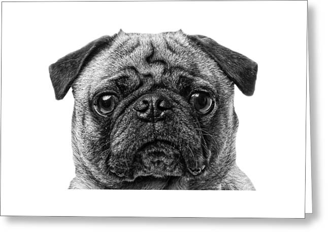 T Shirts Photographs Greeting Cards - Pug T-shirt Greeting Card by Edward Fielding