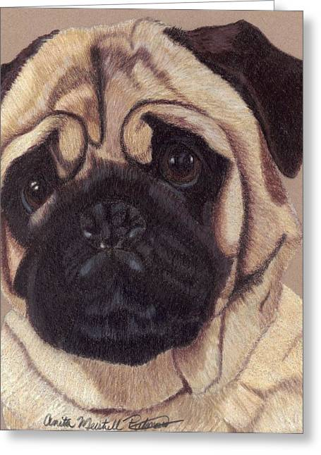 Toy Dog Drawings Greeting Cards - Pug Vignette Greeting Card by Anita Putman