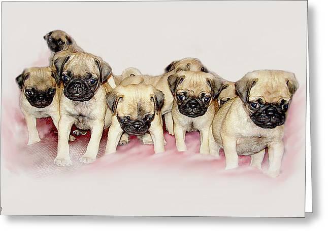 Puppy Digital Art Greeting Cards - Pugs R Us Greeting Card by Bonnie Willis