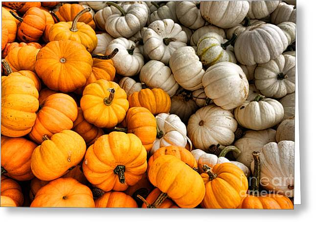 Pumpkin And Pumpkin Greeting Card by Olivier Le Queinec