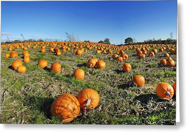 Scandanavia Greeting Cards - Pumpkin Field Greeting Card by Robert Lacy