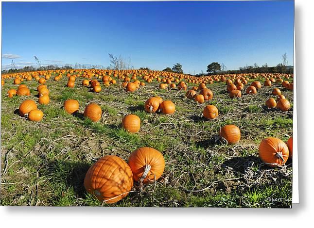 Fyn Greeting Cards - Pumpkin Field Greeting Card by Robert Lacy
