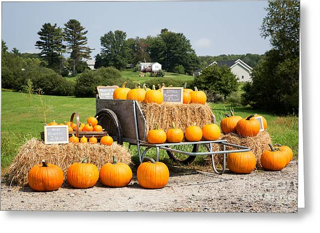 Pumpkin Sale Greeting Card by Jane Rix