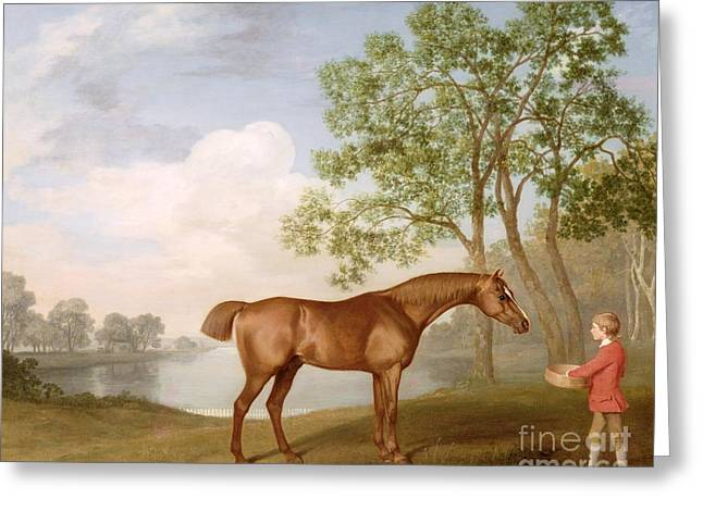 Pumpkin Greeting Cards - Pumpkin with a Stable-Lad Greeting Card by George Stubbs