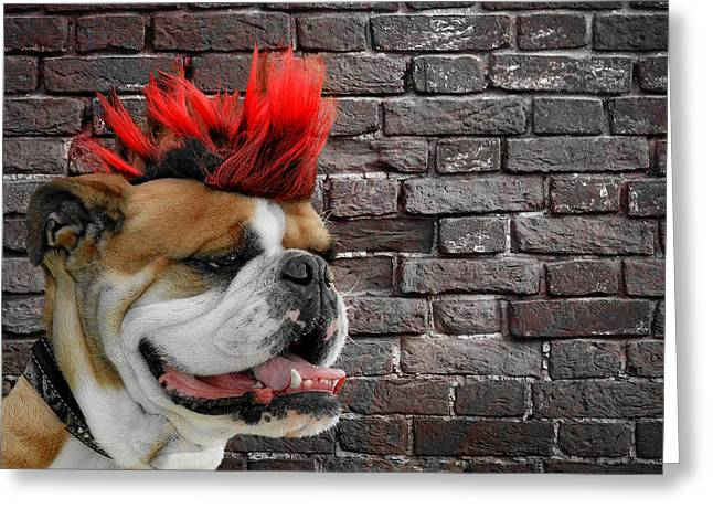British Bulldog Greeting Cards - Punk Bully Greeting Card by Christine Till