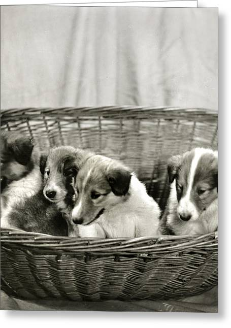 Puppies Of The Past Greeting Card by Marilyn Hunt