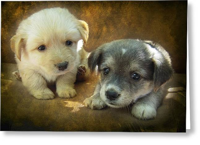 Doggy-style Greeting Cards - Puppies Greeting Card by Svetlana Sewell