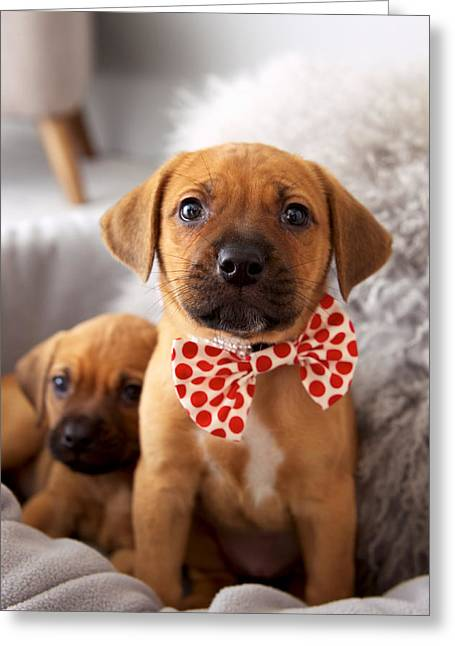 Playful Greeting Cards - Puppies With Bow Ties Greeting Card by Ink and Main
