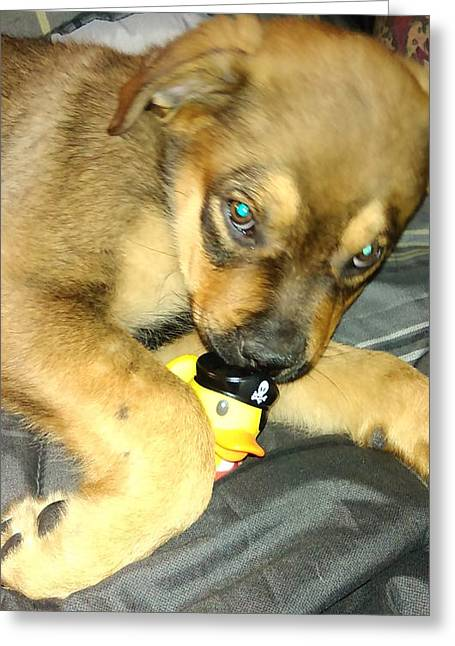 Puppies Photographs Greeting Cards - Puppy and Ducky  Greeting Card by Ashley Waite