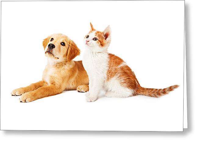 Little Puppy Greeting Cards - Puppy and Kitten Looking to Side Greeting Card by Susan  Schmitz
