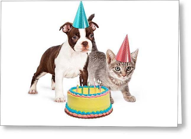 Puppy And Kitten With Birthday Cake Greeting Card by Susan  Schmitz