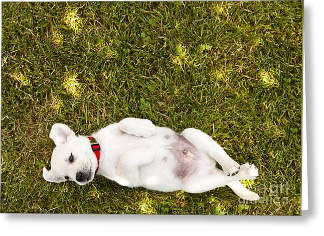 Puppy In The Grass Greeting Card by Diane Diederich