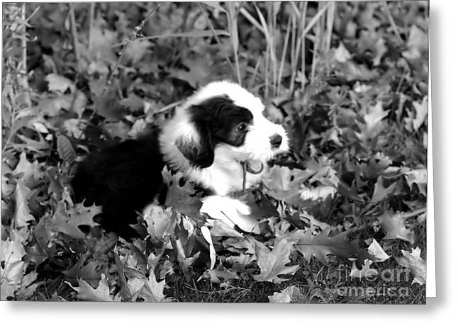 Puppy In The Leaves Greeting Card by Kathleen Struckle