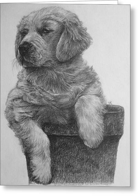 Puppies Drawings Greeting Cards - Puppy Greeting Card by Jolanda Krouwel
