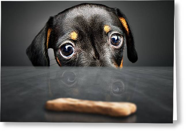 Puppy Longing For A Treat Greeting Card by Johan Swanepoel