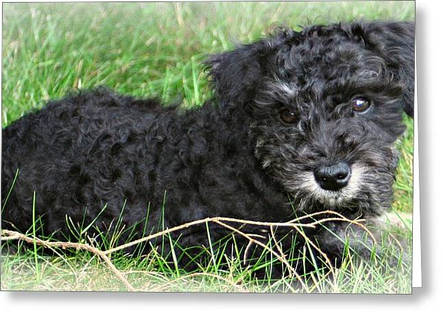 Puppies Photographs Greeting Cards - Puppy Love Greeting Card by Barbara S Nickerson