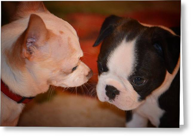 Toy Dog Greeting Cards - Puppy Love Greeting Card by Maria Urso