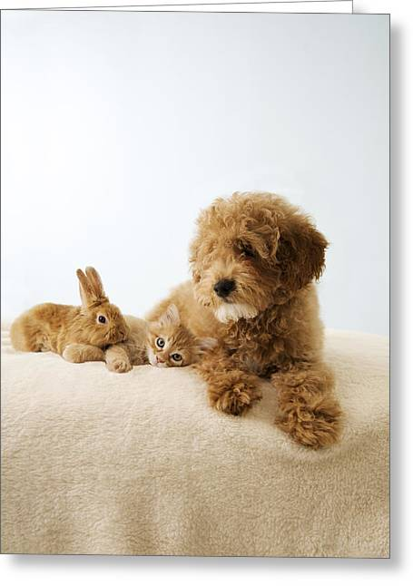 Puppy Lying Down With Kitten And Bunny Greeting Card by Gillham Studios