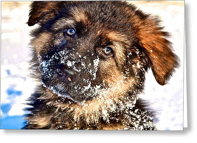 Dogs In Snow. Greeting Cards - Puppy Oskar Greeting Card by Danielle Sigmon