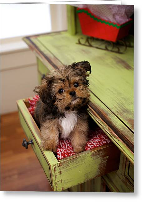 Full Body Greeting Cards - Puppy Sitting In Desk Drawer Greeting Card by Gillham Studios