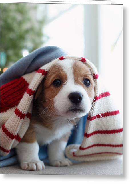 Striped Scarf Greeting Cards - Puppy Sitting Under Blanket Greeting Card by Gillham Studios